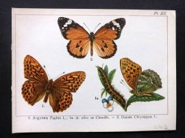 Joanny Martin 1902 Antique Butterfly Print 12